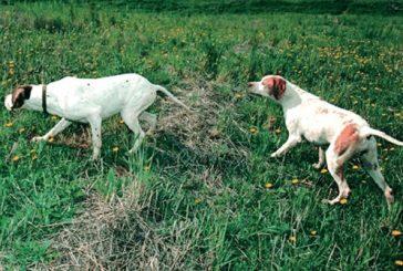 Prueba internacional de perros  en Los Arcos