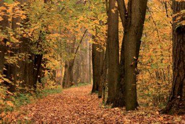 Biomasa, la energía de nuestro entorno