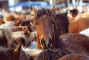 El ambiente de Ferias llenó todos los rincones de Estella