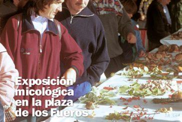 CALLE MAYOR 202 – EXPOSICIÓN MICOLÓGICA EN LA PLAZA DE LOS FUEROS