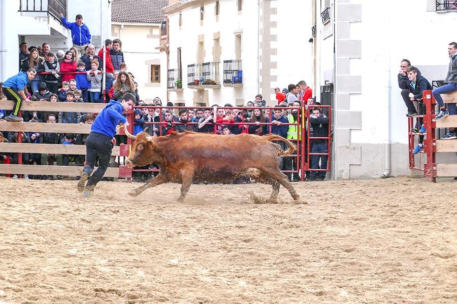 San Veremundo estrenó la temporada de vacas