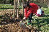 Una semana dedicada al árbol