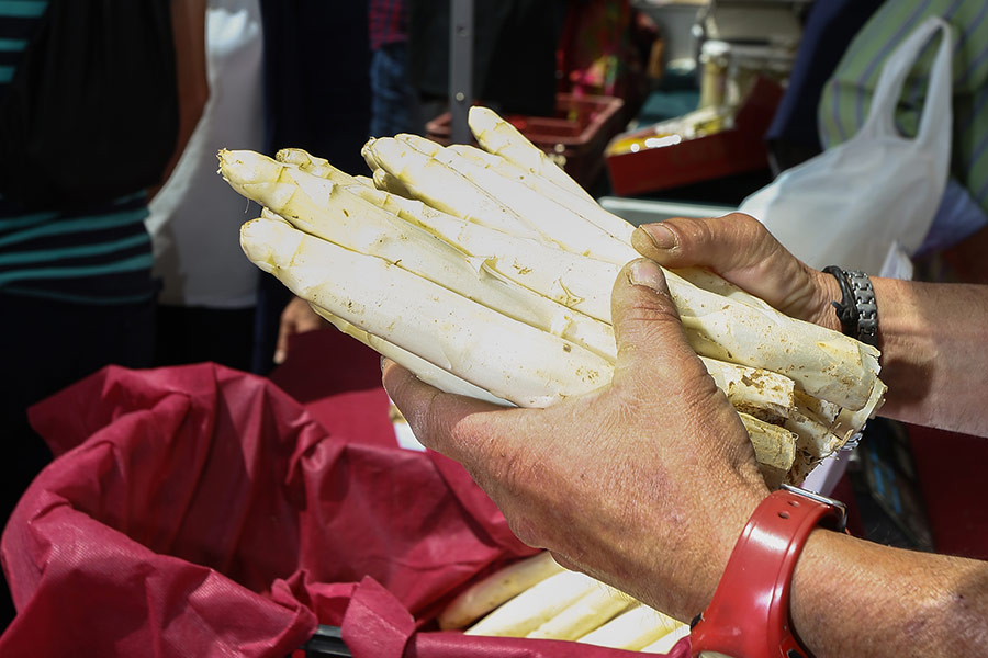 Dicastillo celebra el 6 de mayo el Día del Espárrago